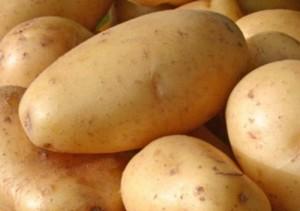 Supplier Sayur di Kota Malang