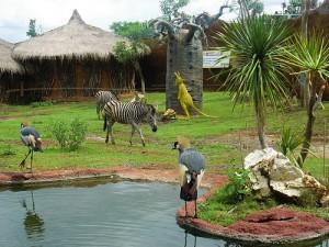 Jawa Timur Park 2 - Secret Zoo