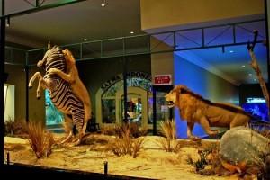 Jawa Timur Park 2 Museum Satwa