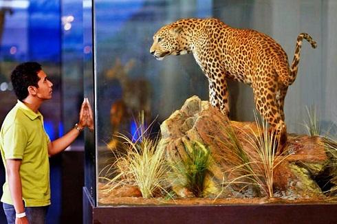 Museum Satwa jawa Timur Park 2