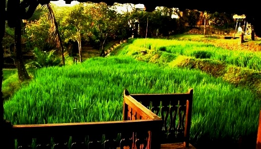 Padi Malang Resort