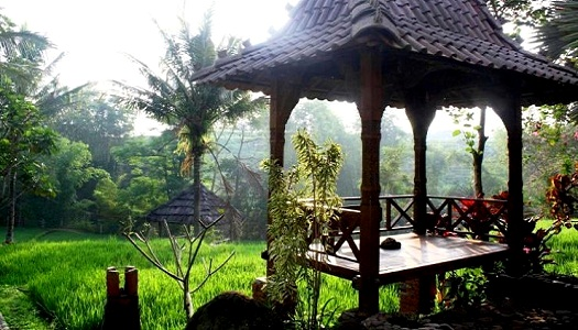 Malang padi resort