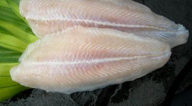 Supplier ikan dori malang